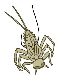 チョロ虫のつけ方