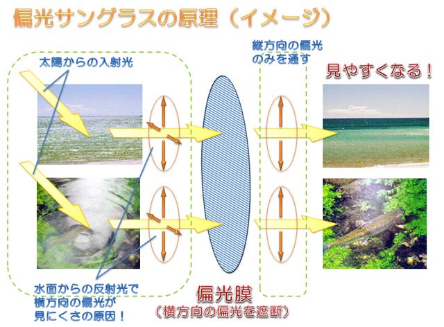 偏光サングラスの原理