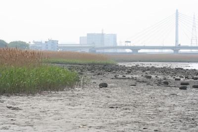 チニング ポイント 干潟 葦際