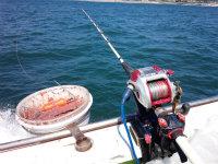 海釣り今釣れる魚 初心者にもおすすめ