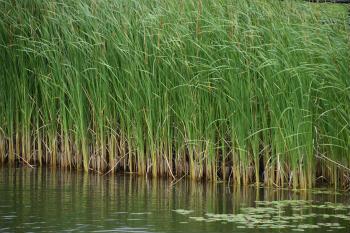 川の魚釣り 連れる場所 アシや水草の周り