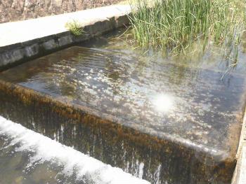 川の魚釣り 連れる場所 流れ込みや流れの落ち込み