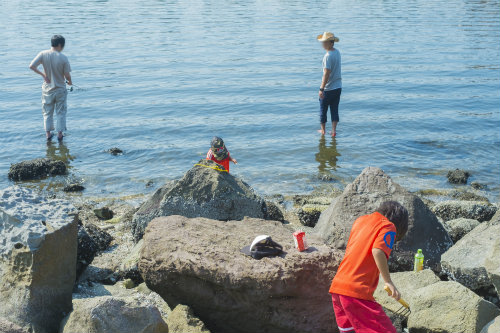 夏 釣れる魚